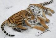 Животиње у сусрет зими