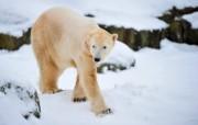 Медвеђи рођендан