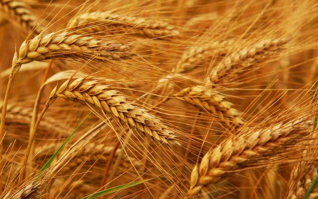 Руска пољопривреда успела да напредује након увођења санкција Русији