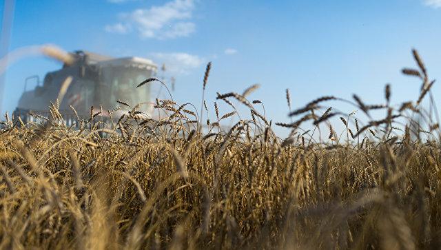 Putin: Rusija očekuje rekordne prinose žita ikada zabeležene