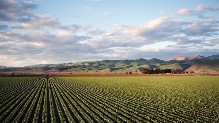 РТ: Кина ће развити пољопривредно земљиште отпорно на сушу и поплаву веће од Шпаније