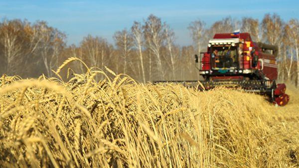 Русија ове године очекује најмање 118 милиона тона житарица