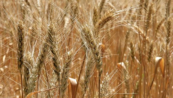 Kina privremeno obustavila kupovinu soje iz SAD