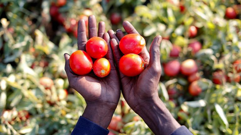 РТ: Криза са коронавирусом могла би изазвати глобални недостатак хране - УН