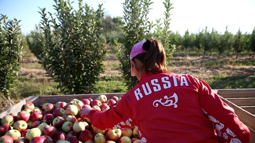 РТ: Руски пољопривредни извоз могао би ове године достићи 30 милијарди долара