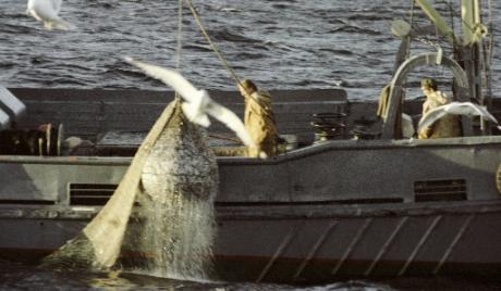 Руске рибаре заштитиће у оквиру СТО