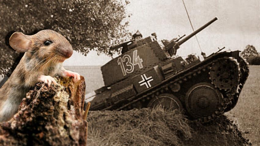 Kaко су мишеви помогли Црвеној Армији да победи Немце у Стаљинграду
