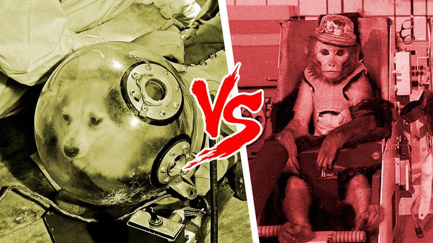 Због чега је СССР у космос слао псе, а не мајмуне?