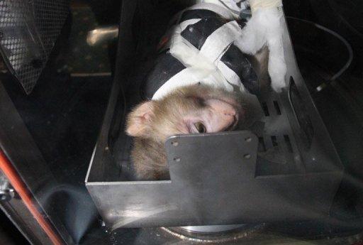 Иран лансирао мајмуна у космос