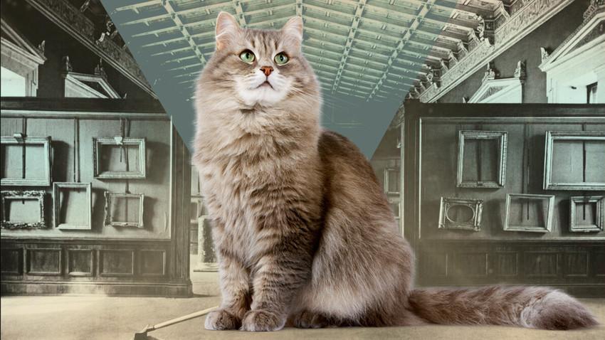 """Како су мачке из Сибира спасле чувени музеј """"Ермитажˮ у Санкт Петербургу"""