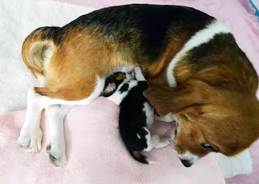 Кина клонирала пса