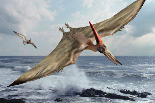 Otkriveni fosili 215 jaja pterosaurusa
