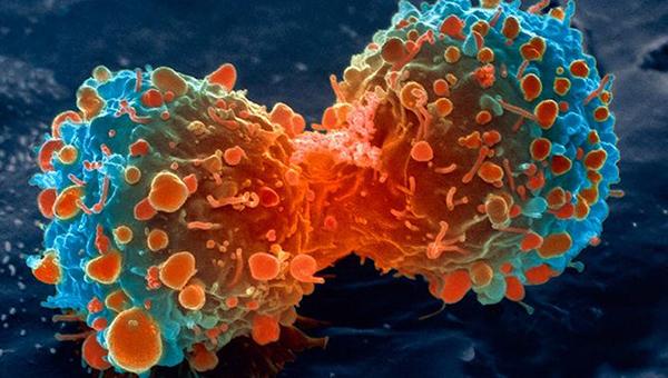 Вакцина против рака уклонила туморе из тела мишева