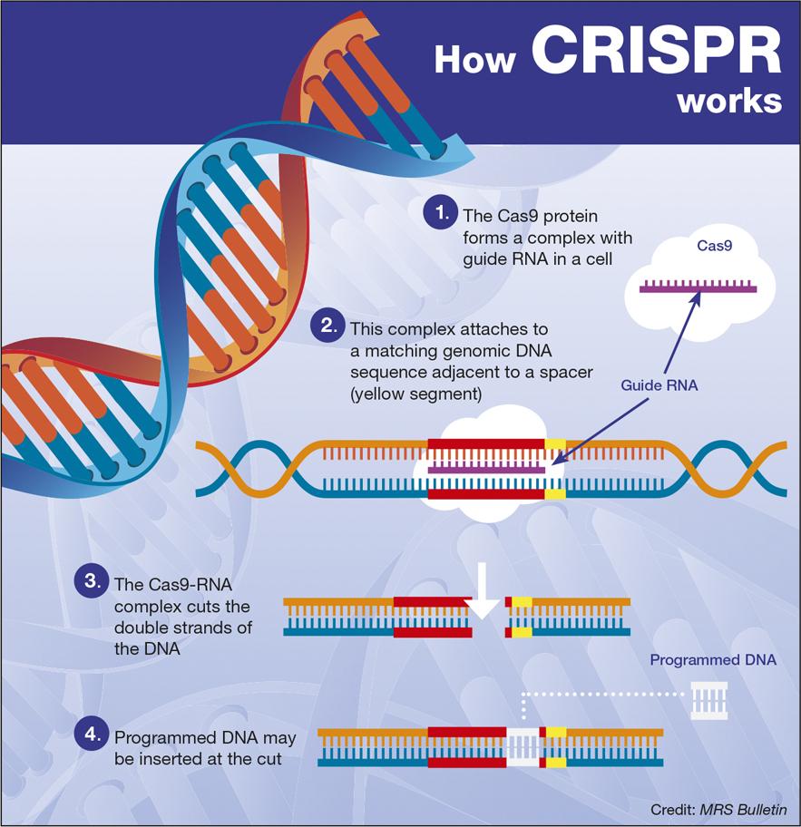 Crispr: Технологија која ће променити медицину