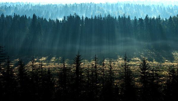 За спас планете током живота морамо засадити бар 30 стабала
