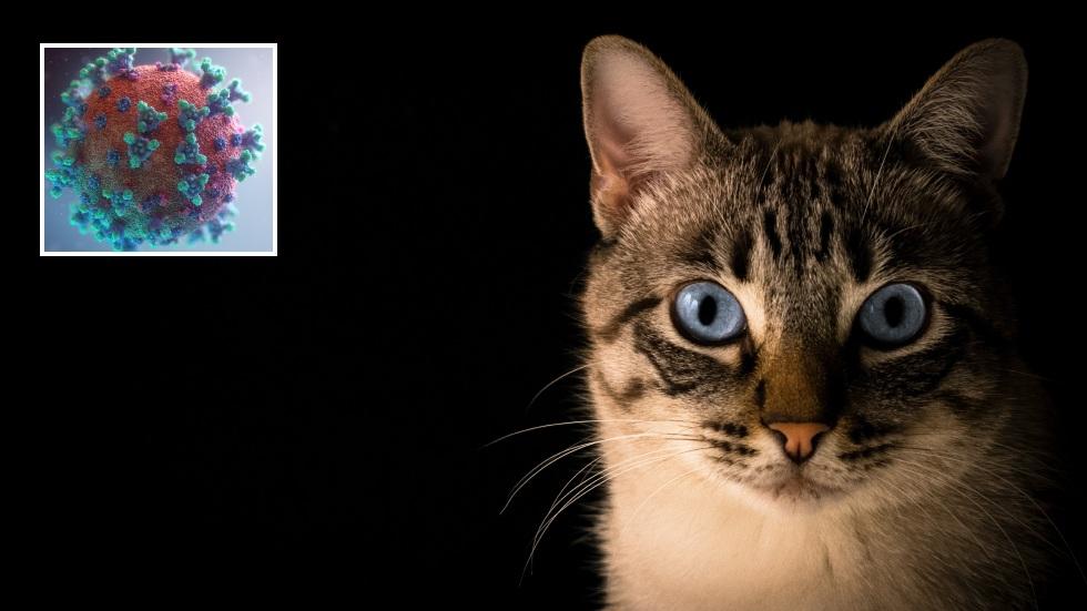"""РТ: Русија регистровала прву вакцину против коронавируса за мачке и псе, док произвођач """"Спутњика V"""" упозорава да кућни љубимци и животиње могу да шире вирус"""