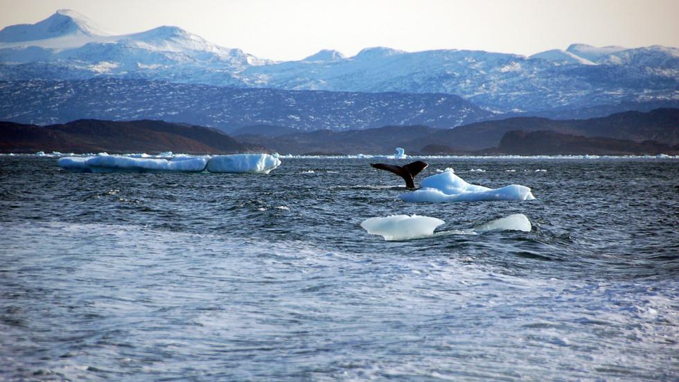 """РТ: Кина осудила САД због саопштења о """"грабежљивим интересима"""" Пекинга на Арктику… док САД желе да купи Гренланд"""