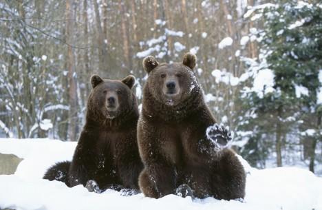 Три мита о Сибиру: зима, медведи и опасност