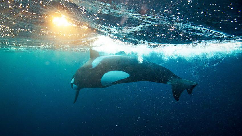 Nezaboravno iskustvo: Ronjenje sa kitovima u Rusiji