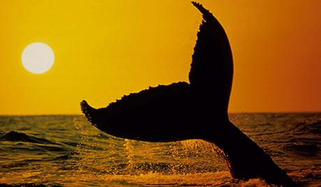 Дан китова