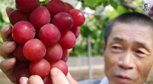 Јапан: 30 зрна грожђа продато за 11.000 долара