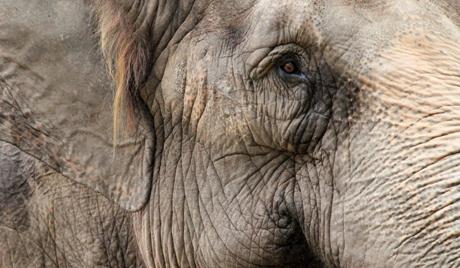 У Индији воз ударио у крдо слонова