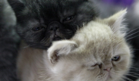 Социјална мрежа за мачке