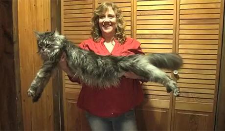 Најдужа мачка на свету умрла у САД