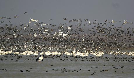 У Кини пронађене птице са два пара крила